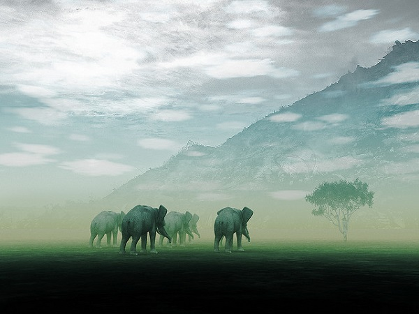 African Elephants in the mist