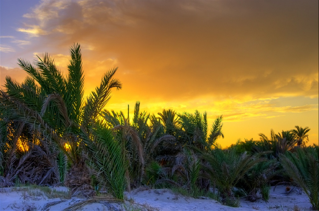 Djerba Island Sunset