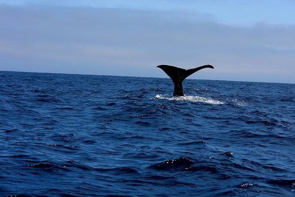 New Zealand Whale Watching