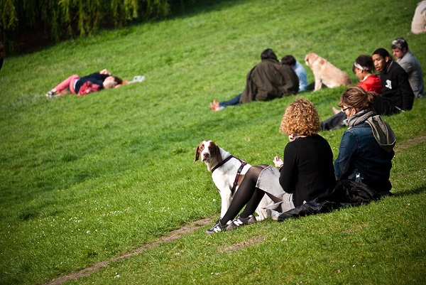 A photogenic dog enjoying its day on a Parisian park