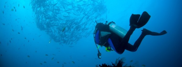 The best diving spots in the world