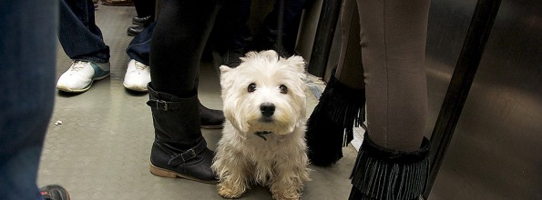 The dog-friendly side of Paris