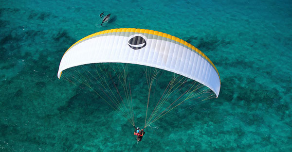 Paragliding over the whales