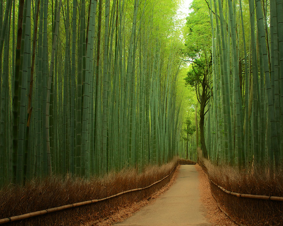 Path inside the bamboo forest in Sagano