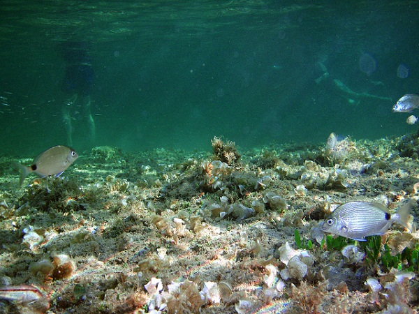 The seabed of Crete