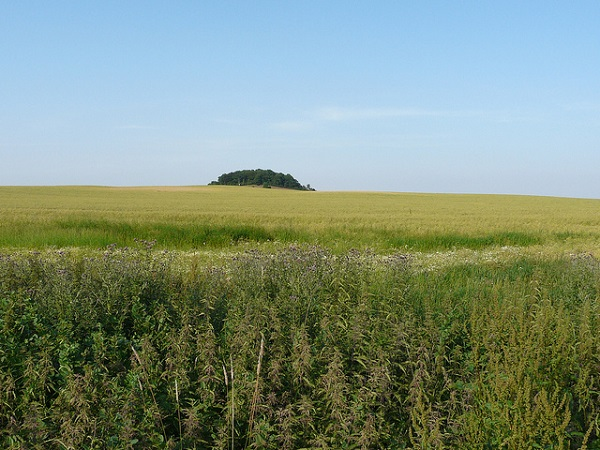 Rügen Fields