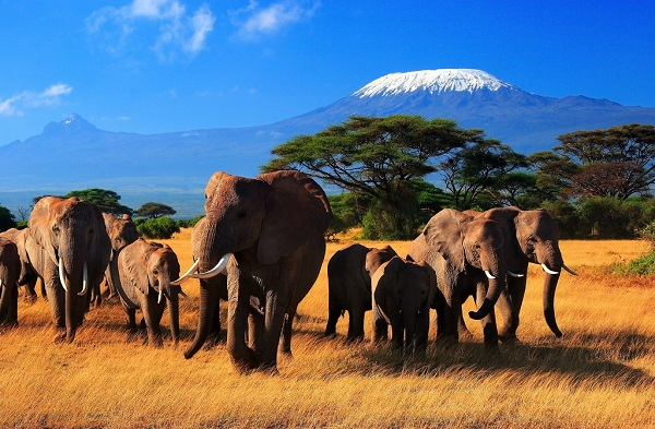 Beauty of Africa