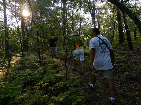Family Hike in the woods