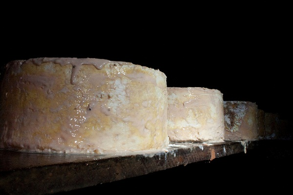 Bejes Picon Cheese Curing