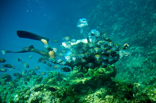 Diving at George Town, Cayman Islands